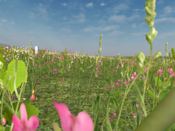 Flower Field - XeNoxT Avatars
