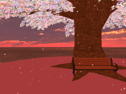 cherry blossom with sunset